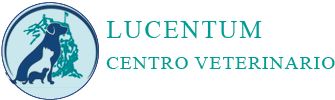 footer logo lucentum